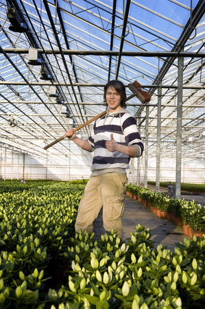 Horticulture stock photo, A man with a broom in his hand giving a thumbs-up inside a glasshouse, surrounded by potted plants by Corepics VOF