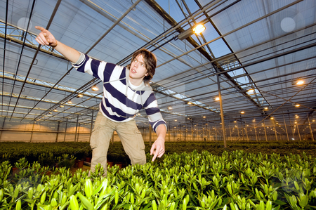 Glasshouse discovery stock photo, A man having made a discovery in a huge glasshouse, calling a colleague by Corepics VOF