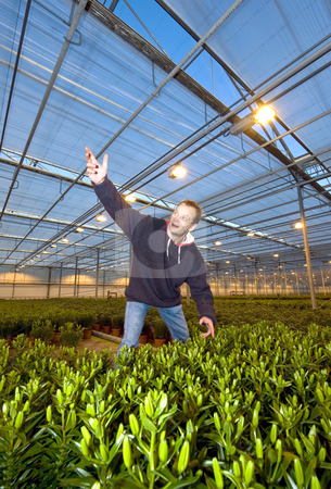 Glasshouse discovery stock photo, A man, having found something special, gesturing wildly with his arm in a glasshouse by Corepics VOF