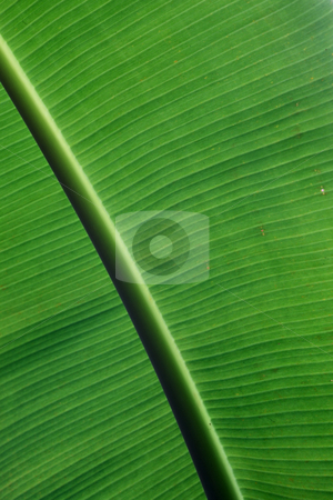Palm leaf stock photo, Extreme close-up of palm leaf by Tom P.