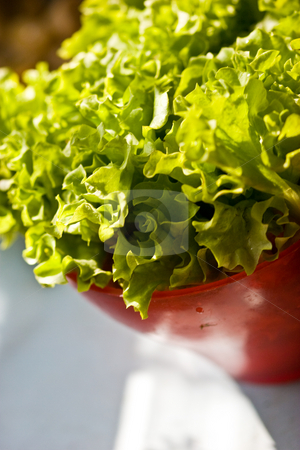 Lettuce stock photo, Food series: tasty fresh lettuce on the bowl by Gennady Kravetsky