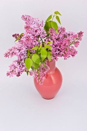 Purple lilac stock photo, Purple lilac branch on the vase over light background by Gennady Kravetsky