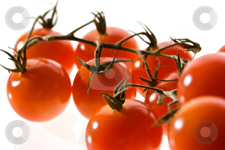 Tomato stock photo, Food series: branch of red tomato over white by Gennady Kravetsky
