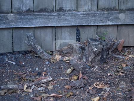 Stump stock photo, An old tree stump near a fence in an outside garden. by Robert Gebbie