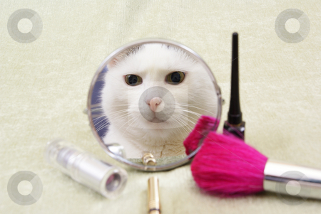 Cat stock photo, Reflection of white she-cat in little mirror by Jolanta Dabrowska