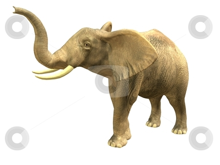 Scenting elephant stock photo, 3D rendered isolated scenting elephant. by Patrik Ruzic