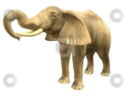 Drinking elephant stock photo, 3D rendered isolated drinking elephant. by Patrik Ruzic