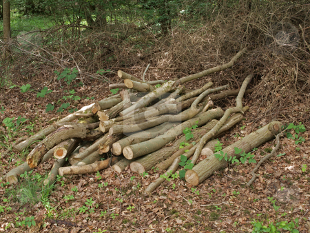 Pile of logs. stock photo, Pile of logs left to attract wildlife in a British wood. by Ian Langley