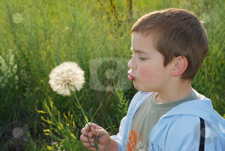 Childs wish stock photo, A small boy with big dreams, backlit with afternoon sun holding big dandelion-like plant in hand and blowing. by Ivan Paunovic
