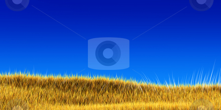 Yellow grass under blue sky stock photo, Dry yellow grass field under a blue sky by Christophe Rolland