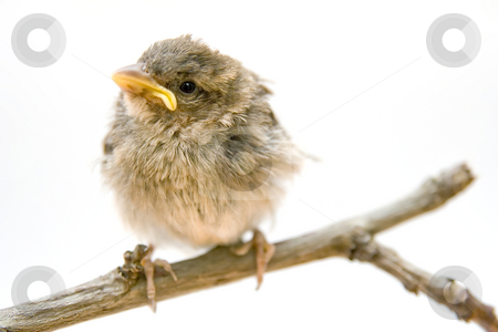 Bird on a branch stock photo, Bird on a branch by Christophe Rolland