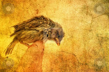 Little bird stock photo, Little bird by Christophe Rolland