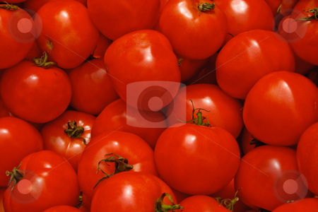Red Tomatoes stock photo, Fresh Tomatoes by Thomas Marchessault