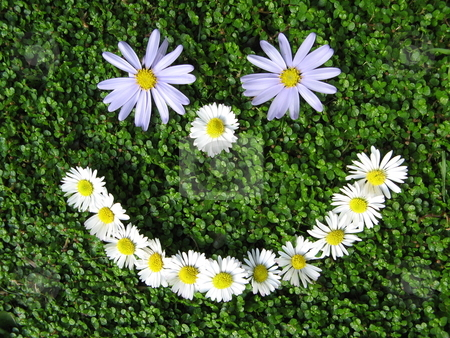 Daisy Smiley Face stock photo,  by Robyn Butler
