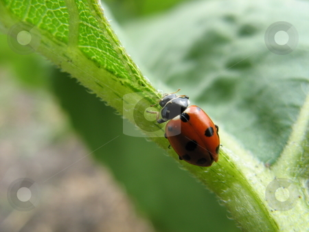 Ladybird on Leaf stock photo,  by Robyn Butler