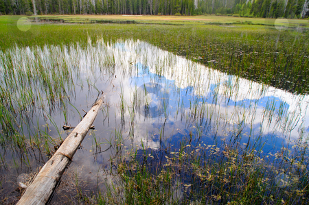 Reflected Sky stock photo, Sky and cloud reflections in the calm water of a california meadow in the sierra nevada mountains. by Lynn Bendickson