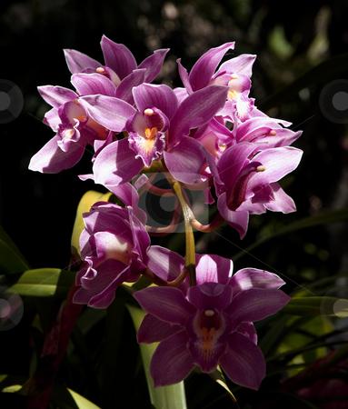 Purple flowering bush stock photo, A colorful bush with purple flowers by Jill Reid