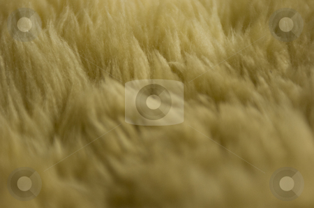 Sheepskin stock photo, Close-up on sheepskin by Andreas Brenner