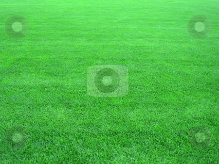 Grass stock photo,  by Stelian Ion
