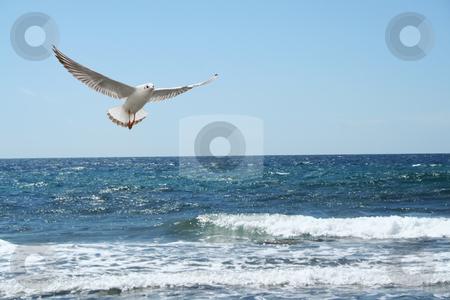 A beautiful seagul stock photo, A beautiful seagul flying over the sea by Stelian Ion
