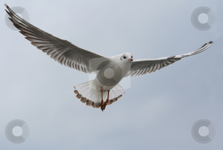 Seagull stock photo, As a magical seagull, flap your wings and fly by Stelian Ion