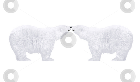 Polar bears stock photo, Polar bears in love  - arctic wild animals by Stelian Ion