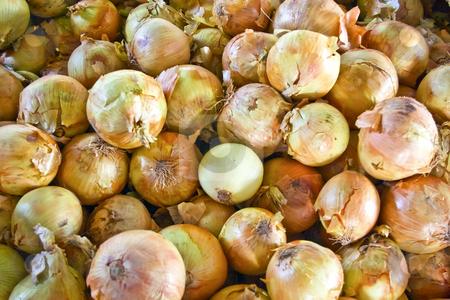 Onions stock photo, Bin of onions at a local farmers' market. by Steve Carroll