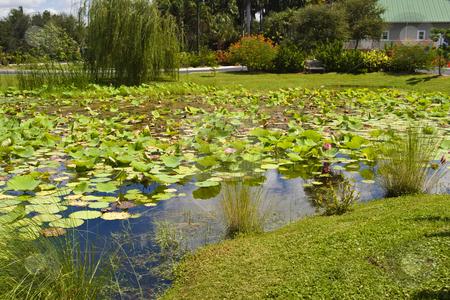 Lily Pond stock photo, Lily pond at Palma Sola Botanical Garden in Bradenton, Florida. by Steve Carroll