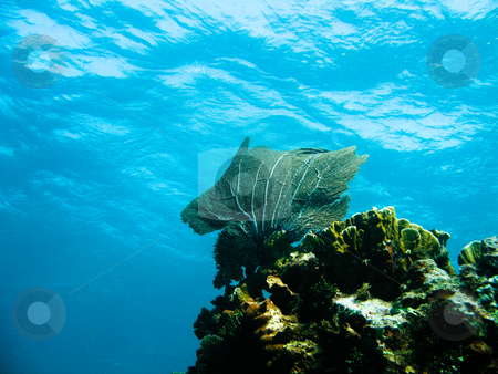 Shots of scuba diving in the Florida keys stock photo, Shots of scuba diving in the Florida keys by Dennis Connelly