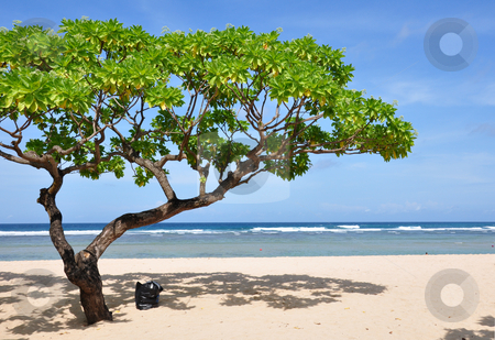 Nusa Dua Beach Tree stock photo, Tree on Nusa Dua beach, Bali, Indonesia. by Daniel Rosner
