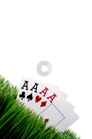 A tilted image of four ace playing cards in grass stock photo, A tilted image of four ace playing cards in grass with a white background by Vince Clements