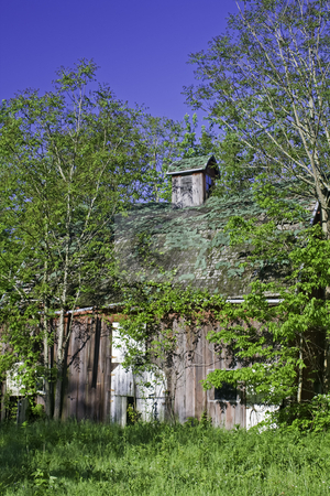 Old barn in the woods stock photo, Old barn in the woods with green vegetation and blue sky vertical by Stephen Goodwin