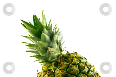 Pineapple Top stock photo, Fresh delicious looking green pineapple fruit on a white background with a clipping path by Keith Wilson