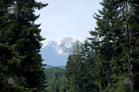 Forrested View of Snow Capped Mountains stock photo, This beautiful landscape shot is snow capped mountains with blue skies and evergreen trees framing the photo. by Valerie Garner