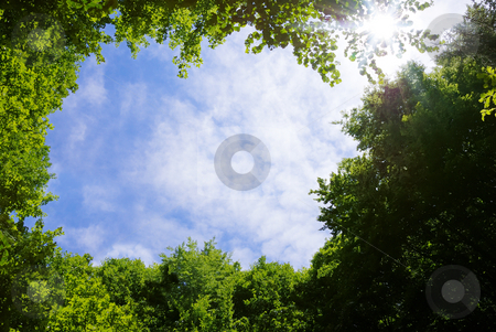 Forest frame stock photo, Picture frame made of tree tops surrounding sky and Sun. by Ivan Paunovic