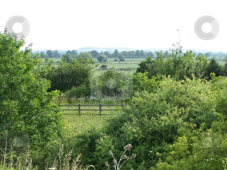 Leicestershire countryside stock photo, Forest veiw in the countryside by Lee Measures