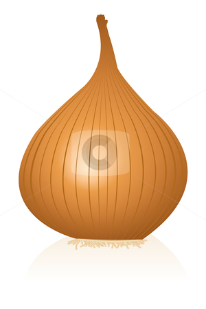 Onion stock vector clipart, Illustration of onion by Laurent Renault