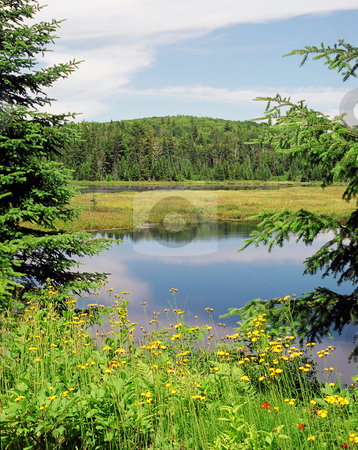 Lake stock photo, Algonquin Park green plants and trees blue sky and water by Pavel Cheiko