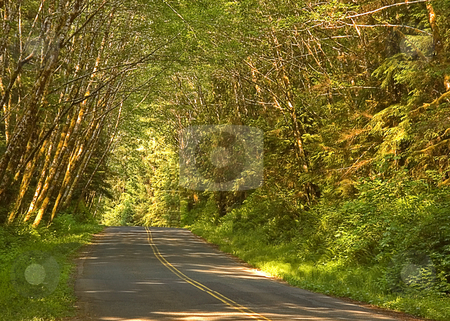Wooded Country Road stock photo, This is a beautiful country road with gentle curves and forest on both sides. by Valerie Garner