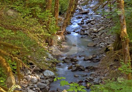 Silky Gentle Mountain Stream stock photo, Stunning photo of a silky looking stream in a mountain rain forest. by Valerie Garner