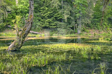 Beautiful Swamp Marsh Photo stock photo, This beautiful photo of a swamp shows nice reflections in the water of this marsh. by Valerie Garner