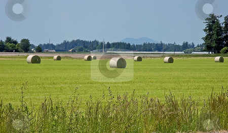 Large Round Hay Bales in Field stock photo, This rural shot is many large round hay bales in the field fresh after harvesting.  Blue sky and mountains in the background. by Valerie Garner
