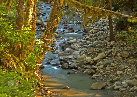 Beautiful Stream in Hoh National Forest stock photo, This beautiful stream is located in Hoh national forest and offers peaceful reflection with logs reaching over water. by Valerie Garner