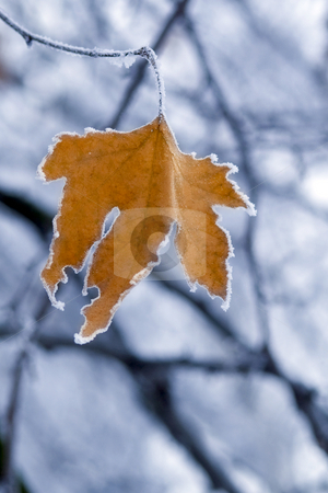 Frozen Leaf. stock photo, Frozen leaf with crystals on tree branch closeup. by Borislav Stefanov