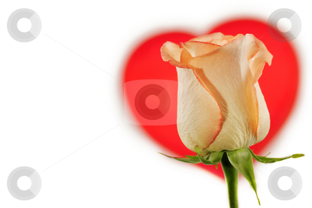 Valentines rose stock photo, Valentines composition - red rose and heart isolated on white. by Borislav Stefanov