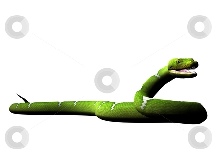 Attacking green python stock photo, Green python rendered on white background by Patrik Ruzic