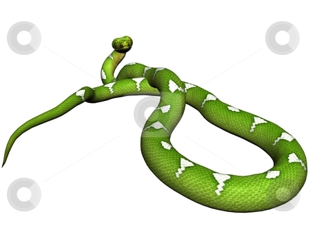 Green python stock photo, Green python rendered on white background by Patrik Ruzic