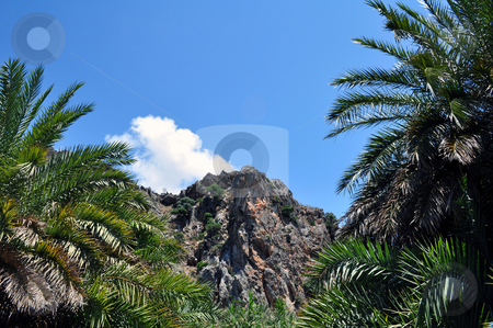Palm trees and mountains at Preveli beach stock photo, Travel photography: Palm trees and mountains at Preveli beach, Southern Crete by Fernando Barozza