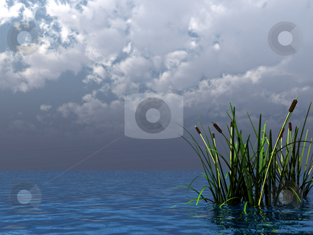 Storm stock photo, Waterlandscape with reed and cloudy sky - 3d illustration by J?