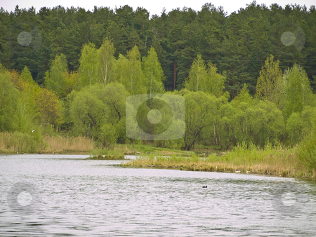 Rural lake stock photo, Rural lake with green bushes and forest at the background by Sergej Razvodovskij